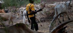 Fulani herdsmen on a farmland