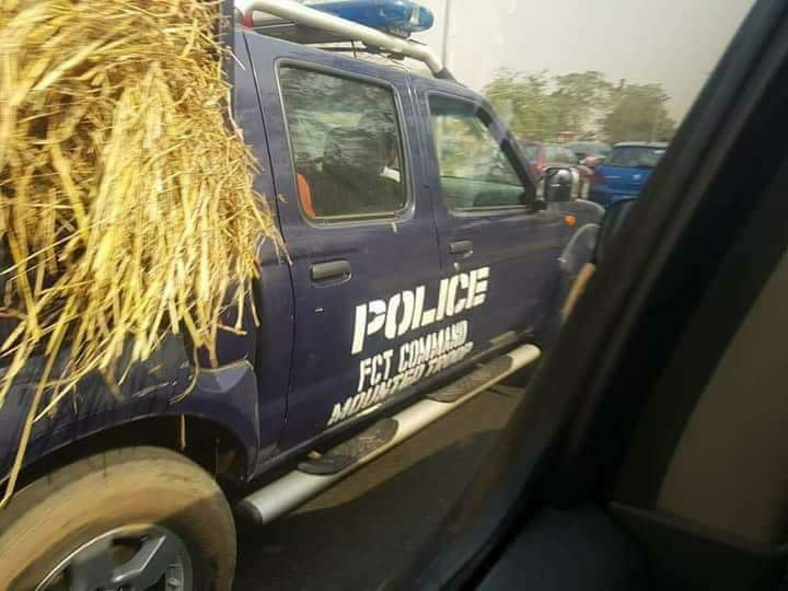 In Pictures: Nigeria Police truck as cattle feed transport