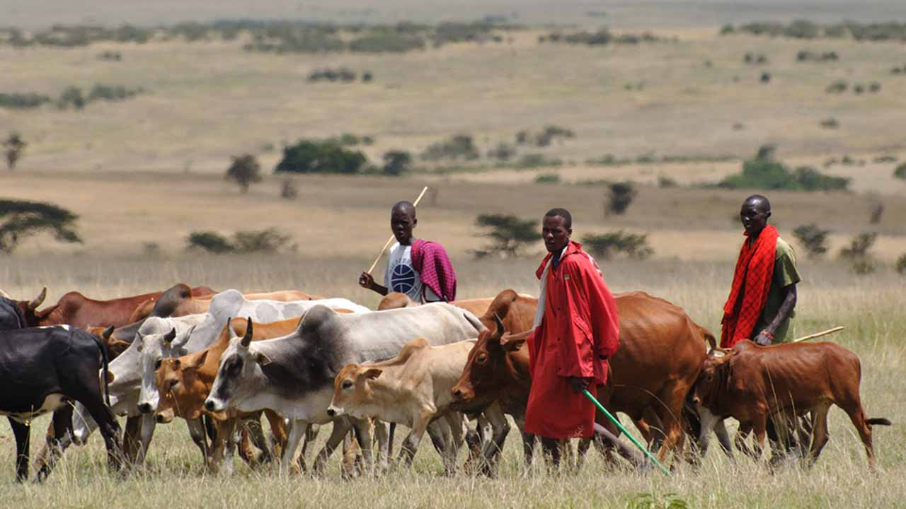 Herdsmen kill 2 Police men in devastating ambush