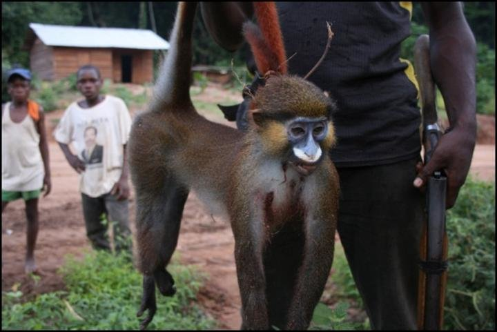 Aggressive monkeys trouble Lagos residents