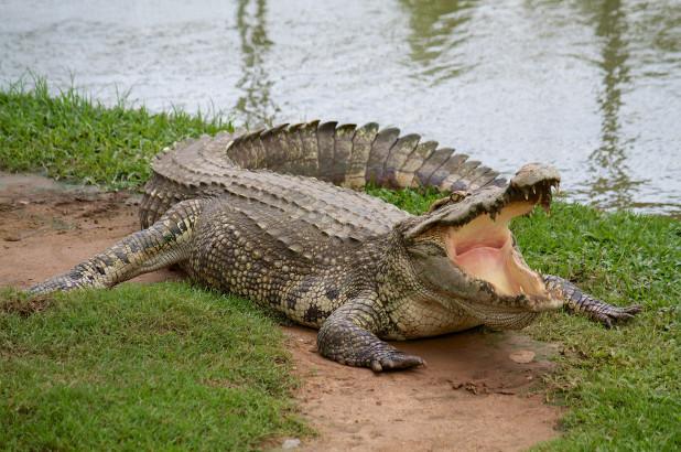 Crocodile kills pastor as he baptizes followers near lake