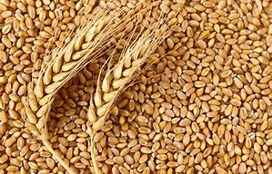 Wheat import to Nigeria seen rising by 200,000 tons on